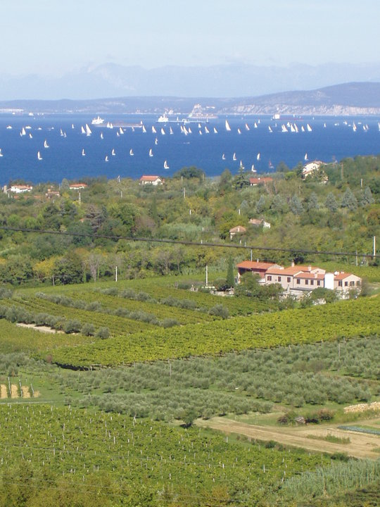 Azienda Agricola Vigna sul Mar